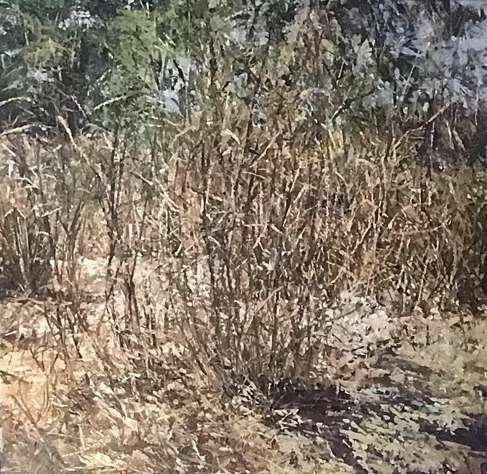Return of nature_Amorn Treemek